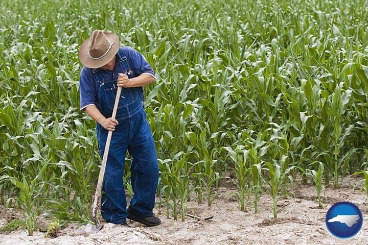 farmer-cornfield-720-nc